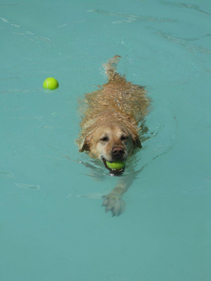 Lexie 2010 splash! 071